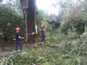 Summer Tree Work