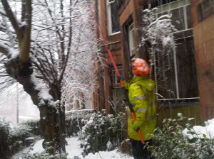 Clearing Trees of Snow