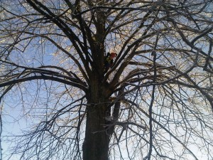Winter Tree Work