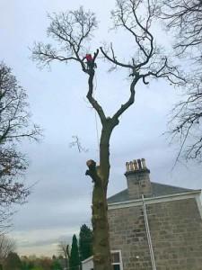 tree removal Bishopton