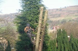 Tree Felling in Kilmacolm