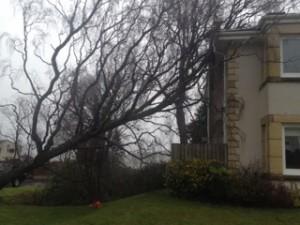 Emergency - Storm Damage